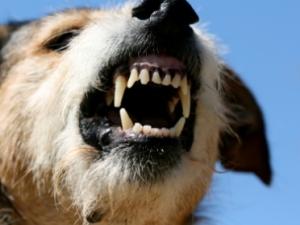 Ataques de Mordidas de Perro Featured Image